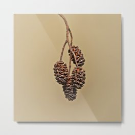 Little pine cones from Alder tree - Minimal Photography Metal Print