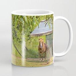 Portrait of a miniature horse mare Coffee Mug