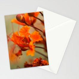 Orange & Red Stationery Cards