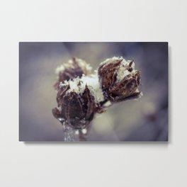 Winter Rose Of Sharon Metal Print