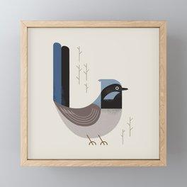 Superb Fairywren, Bird of Australia Framed Mini Art Print