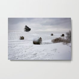 Frosted Wheat - Hay Bales Covered in Snow on Winter Day in Oklahoma Metal Print