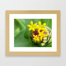 budding wildflower Framed Art Print