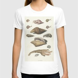 Shellfish, seaweed, snails and bunny skull - circa 1560 T-shirt
