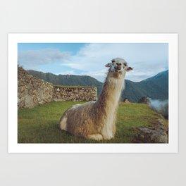 No Prob-llama - Art Print Art Print