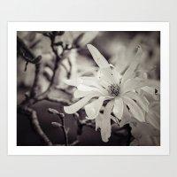 magnolia Art Prints featuring magnolia by Bonnie Jakobsen-Martin