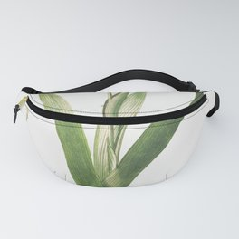 Plantae Selectae No 52-Ixia or Corn Lily by Georg Dionysius Ehret Fanny Pack