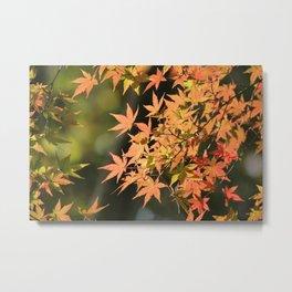 Beautiful Japanese Maple Photography Metal Print