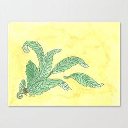 Acanthus Leaves Canvas Print