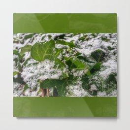 Snow & Ivy Metal Print