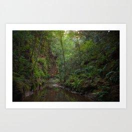 aptos creek canyon Art Print