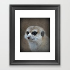 Erdmännchen  Framed Art Print