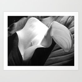 Calla Lily with Tiny Ant - Fine Art Print Art Print