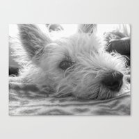 westie Canvas Prints featuring Westie puppy by  Alexia Miles photography