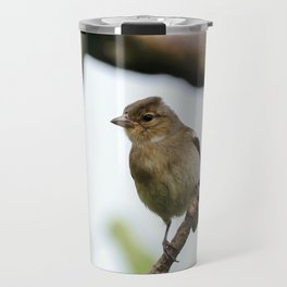 Young Chaffinch Songbird Bird Perching on a Branch - Wales, UK Travel Mug