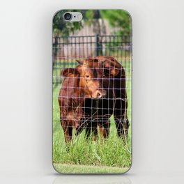 Cow Beyond the Fence iPhone Skin