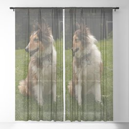 Dog by Teagan Turner Sheer Curtain