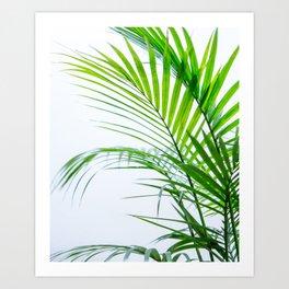 Palm leaves paradise Art Print