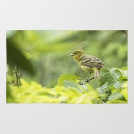 Female Western Tanager Rug