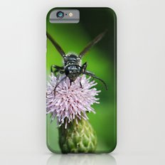 Bee and a flower iPhone 6s Slim Case