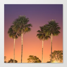 palm in los angels Canvas Print