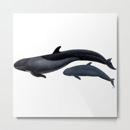 False killer whale Metal Print