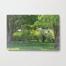 Shadows Under the Tree Metal Print