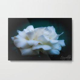 Satin White Rose Metal Print