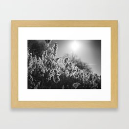 Sunkissed by the River Framed Art Print
