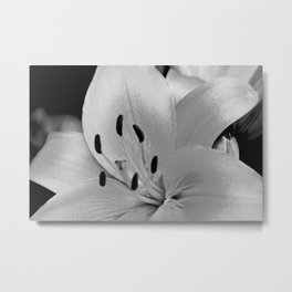 White Lily Flower Close Up Metal Print