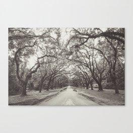 Spanish Moss, Savannah GA Canvas Print