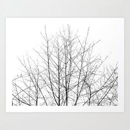 WINTER TREE LIGHT Art Print