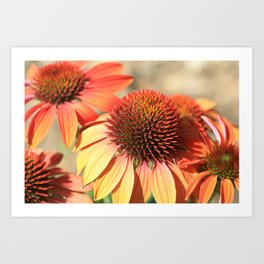 Echinacea Late Summer Bloom by Reay of Light Art Print