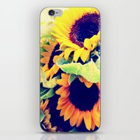 always sunny iPhone & iPod Skins featuring Always Sunny Sunflowers by LeeAnnPoling