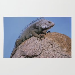 Iguana from Aruba Rug