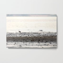 Scroll on the beach. Metal Print