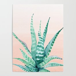 Desert Succulent Aloe Vera Poster