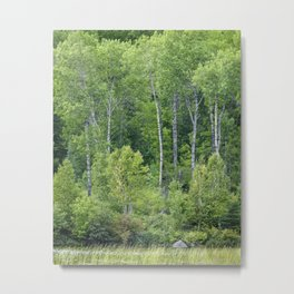 Mystery of the Forest Metal Print