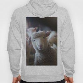 Sheep Looking at Camera Hoody