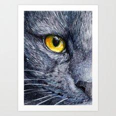 Grey cat 258 Art Print