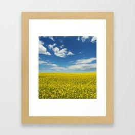 Canola Afternoon Framed Art Print