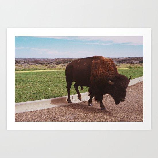 Buffalo Crossing the Road Art Print
