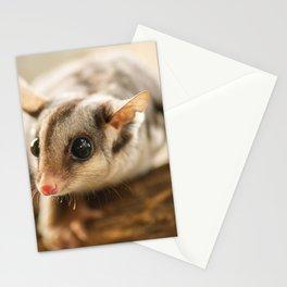 Squirrel Glider Stationery Cards
