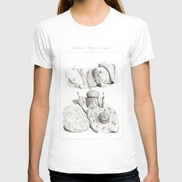 Human Anatomy Art Print BREAST MAMMARY GLAND Vintage Anatomy, doctor medical art, Antique Book Plate T-shirt