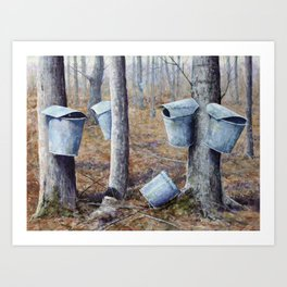 Maple Sugaring Art Print