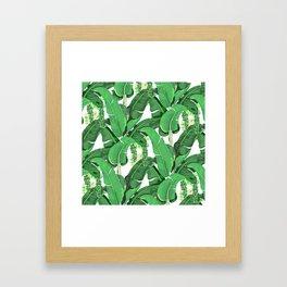 banana leaves brazilliance Framed Art Print