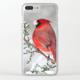 Snow on His Face (Northern Cardinal) Clear iPhone Case