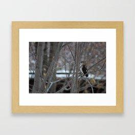 Hawk's Got an Eye on You Photo Framed Art Print