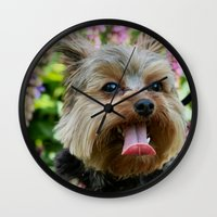 yorkie Wall Clocks featuring Happy Yorkie by IowaShots