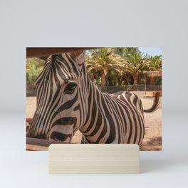 The zebra Mini Art Print